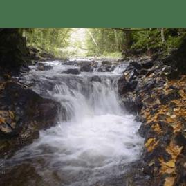 Parc des chutes de Denholm